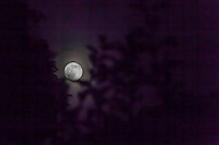 The June full moon, known as the Strawberry Moon, Rose Moon and  Honey Moon.