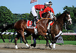 09 July 30: Activity Report prior to the 95th running of the grade 2 Sanford Stakes for two year olds at Saratoga Race Track in Saratoga Springs, New York.