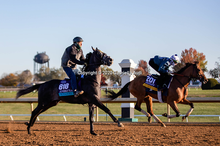 November 4, 2020: Outadore, trained by trainer Wesley A. Ward, and Dunbar Road, trained by trainer Chad C. Brown, exercise in preparation for the Breeders' Cup Distaff at Keeneland Racetrack in Lexington, Kentucky on November 4, 2020. Gabriella Audi/Eclipse Sportswire/Breeder's Cup/CSM