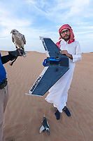 "United Arab Emirates (UAE). Dubai Desert Conservation Reserve. Dylan Freeman (L) is a falconer from Zimbabwe working for the Shaheen company. On a remote desert area, he holds a Gyr falcon. The gyrfalcon (Falco rusticolus) is the largest of the falcon species. His assistant is carrying a remote controlled airplane used to train falcons. The raptor flies behind the plane and tries to catch a fake pigeon tied on a rope and used as prey. The man is wearing a white thawb (thobe, dishdasha, kandora) which is an ankle-length garment, usually with long sleeves, similar to a robe, kaftan or tunic, commonly worn in the Arabian Peninsula. The headdress is called ghutrah. Falcons are birds of prey in the genus Falco, which includes about 40 species. The bird is carrying on his back a GPS antenna to track the animal in case it get lost flying away. Adult falcons have thin, tapered wings, which enable them to fly at high speed and change direction rapidly. Additionally, they have keen eyesight for detecting food at a distance or during flight, strong feet equipped with talons for grasping or killing prey, and powerful, curved beaks for tearing flesh. Falcons kill with their beaks, using a ""tooth"" on the side of their beaks. The United Arab Emirates (UAE) is a country in Western Asia at the northeast end of the Arabian Peninsula. 17.02.2020  © 2020 Didier Ruef"