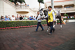 Graydar in the walking ring before the 57th running of the Donn Handicap (G1) at Gulfstream Park.  Hallandale Beach Florida. 02-09-2013