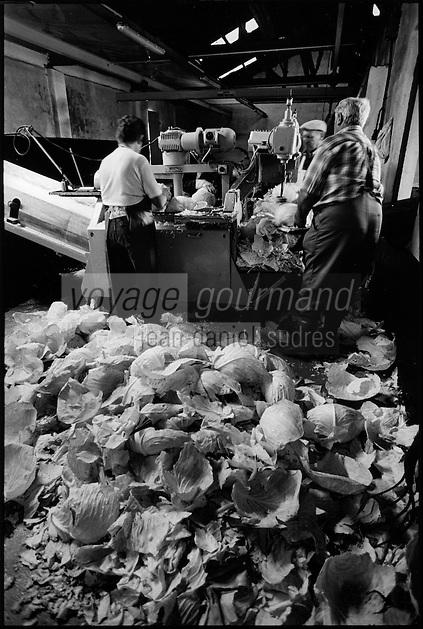 Europe/France/Alsace/67/Bas-Rhin/ Krautergersheim: Une choucrouterie chez Monsieur Pfleger, producteur de choucroute- Enlèvement du trognon des choux