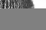 Europa, DEU, Deutschland, Nordrhein Westfalen, NRW, Rheinland, Niederrhein, Wachtendonk, Fluss, Die Niers, Flusslandschaft, Winter, Schnee, Baeume, Pappeln, Pappelbaeume, Kategorien und Themen, Natur, Umwelt, Landschaft, Jahreszeiten, Stimmungen, Landschaftsfotografie, Landschaften, Landschaftsphoto, Landschaftsphotographie, Wetter, Wetterelemente, Wetterlage, Wetterkunde, Witterung, Witterungsbedingungen, Wettererscheinungen, Meteorologie, Wettervorhersage<br /> <br /> [Fuer die Nutzung gelten die jeweils gueltigen Allgemeinen Liefer-und Geschaeftsbedingungen. Nutzung nur gegen Verwendungsmeldung und Nachweis. Download der AGB unter http://www.image-box.com oder werden auf Anfrage zugesendet. Freigabe ist vorher erforderlich. Jede Nutzung des Fotos ist honorarpflichtig gemaess derzeit gueltiger MFM Liste - Kontakt, Uwe Schmid-Fotografie, Duisburg, Tel. (+49).2065.677997, <br /> archiv@image-box.com, www.image-box.com]