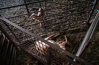 14/01/2021. Bustarviejo, madrid. España<br /> <br /> En la explotación extensiva y ganadera La Caperuza, en Bustarviejo, en la sierra norte de Madrid, han perdido a algunos de sus animales y los estos no pueden salir a pastar por la imposibilidad de acceder al alimento. Sus propietarios deben acarrear las cantaras de leche con la que realizan quesos y productos artesanales sobre los hombros caminando por la nieve para llegar a la carretera más próxima y no paralizar su actividad.<br /> <br />  ©Pedro Armestre/Greenpeace