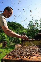 The sky is filled with a continuous buzz. The never-ending toing-and-froing of the bees, a veritable air-lift between the sunflower fields and the apiary seems to announce abundant honey production and so do the many supers..