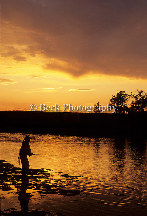 Silhouetted on the Bighorn River, Montana