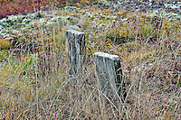 Ancient gravestones.