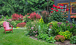 Vashon-Maury Island, WA: Summer perennial garden, red adirondack chair and potting shed featuring barberries, echinacea, roses, sedum, persicaria and lilies