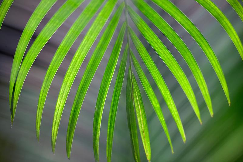 Tropical leaf. Kauai, Hawaii.