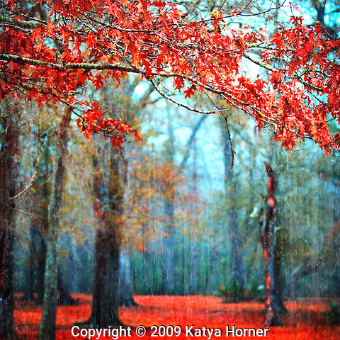 "From the Passionate Earth Series -- nature photos, each with an element of ""red."""