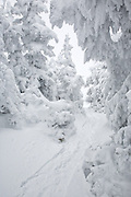 Kinsman Ridge Trail on Cannon Mountain during the winter months in the White Mountains, New Hampshire USA.