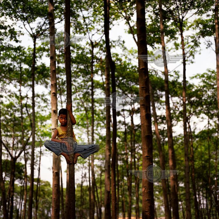 A young boy climbing a tree.