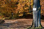 Oesterreich, Salzburger Land, Salzburg: Herbststimmung auf dem Kapuzinerberg, Wanderwege | Austria, Salzburger Land, Salzburg: autumn scenery at Capuchin mountain, hiking trails
