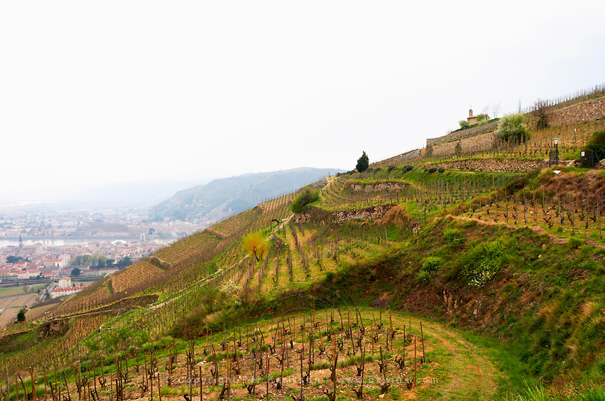 The chapel on top of the hill the Chapelle vineyard and lower down the Les Bessards vineyard. The Hermitage vineyards on the hill behind the city Tain-l'Hermitage, on the steep sloping hill, stone terraced. Sometimes spelled Ermitage. Tain l'Hermitage, Drome, Drôme, France, Europe