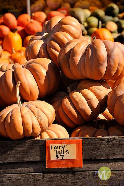 Dresse's Produce, Route 15, Selinsgrove, PA. Fairy Tale pumpkins.