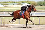 #67 fast work of day 10:0Fasig-Tipton Florida Sale,Under Tack Show. Palm Meadows Florida 03-23-2012 Arron Haggart/Eclipse Sportswire.
