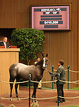 13 September 2010.  Hip #37 Bernardini - Cuando Quiere filly sold for $410,000 at the Keeneland September Yearling Sale.   Consigned by Three Chimneys.