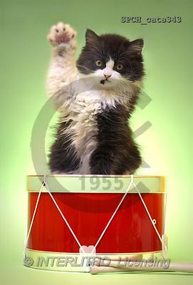 Xavier, ANIMALS, cats, photos(SPCHcats343,#A#) Katzen, gatos