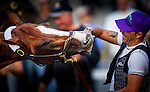 April 30, 2014: California Chrome plays with exercise rider Willy Delgado at Churchill Downs in Louisville Ky. Alex Evers/ESW/CSM