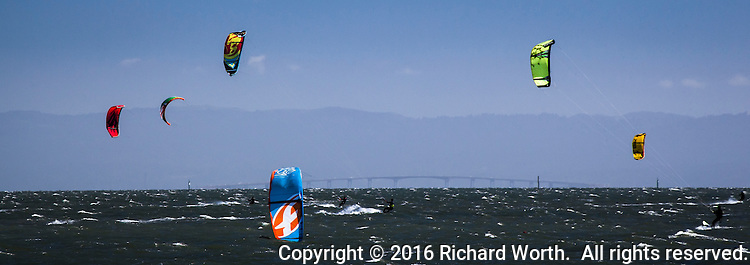 Colorful kiteboard kites are flying while one is partially submerged in the water.  San Francisco Bay, California.