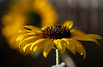 Misc. flowers/garden critters