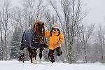 Winter 2011 Horses Springdale Farm Annie Galanda