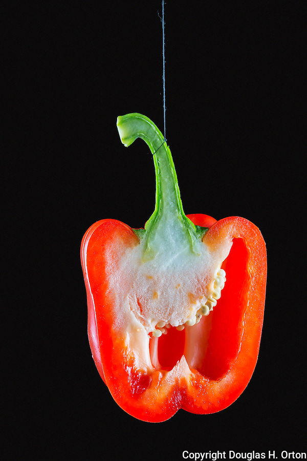 Single red pepper, split and swinging on thread.  Multiple exposure.