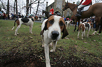 The Blessing of the Hounds at the Grace Episcopal Church in Keswick, VA.  11-23-06. Photo/andrew Shurtleff