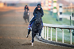 Extravagant Kid, trained by trainer Brendan P. Walsh, exercises in preparation for the Breeders' Cup Turf Sprint.
