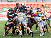 20th February 2021; Welford Road Stadium, Leicester, Midlands, England; Premiership Rugby, Leicester Tigers versus Wasps; Both teams work hard for the ball during a maul