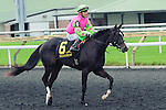 Skinner Box(6) with Jockey Luis Contreras aboard after the Natalma Stakes at Woodbine Race Course in Toronto, Canada on September 13, 2014 with Jockey Patrick Husbands aboard.