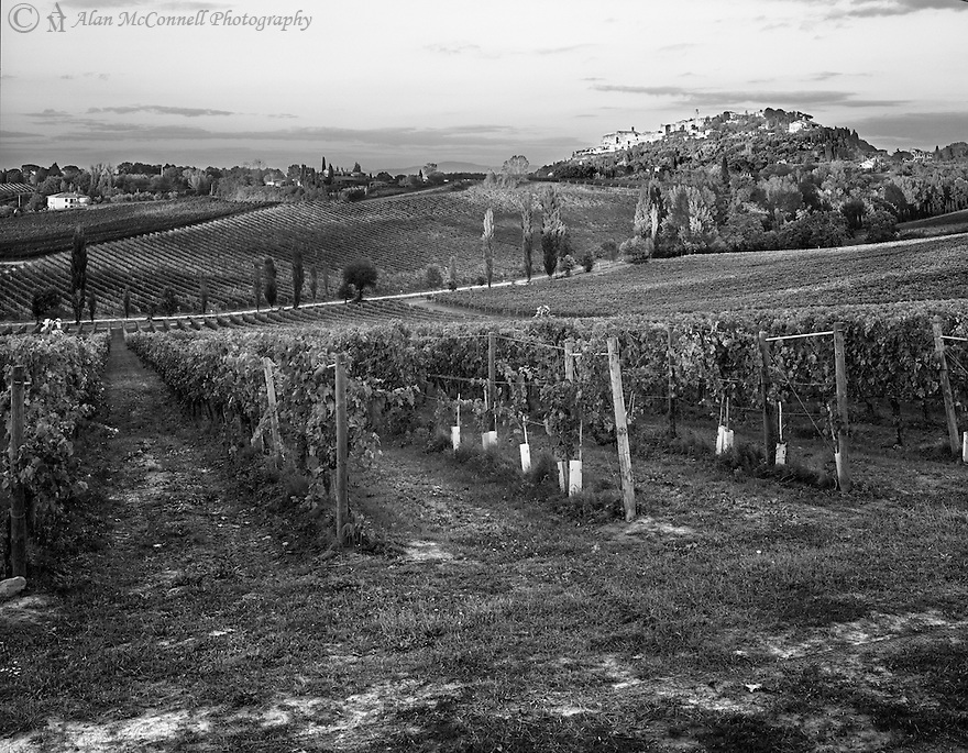 """""""Vineyards of Montepulciano""""<br /> Montepulciano, Italy<br /> 2015<br /> <br /> Some of the finest wines of Italy are developed from the vineyards that surround Montepulciano in Tuscany.<br /> <br /> 4 x 5 Large Format Film"""