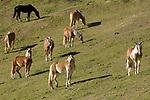 Italien, Suedtirol, Hafling: Wandergebiet oberhalb Merans, Namensgeber fuer die Haflinger Pferderasse | Italy, South Tyrol, Alto Adige, Avelengo: hinking area above Merano, eponym for Hafling horse breed