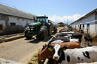 ROMANIA Transylvania, Voila, milk cow farm of CarmOlimp / RUMAENIEN Transsylvanien Siebenbuergen, Voila, Milchviehbetrieb CarmOlimp