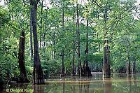 BS06-005z  Louisiana Swamp, cypress trees, Atchafalaya Swamp
