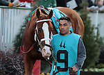 Gal About Town in the 9th race, The Golden Rod Grade 2 $150,000 at Churchill Downs.  November 24, 2012.