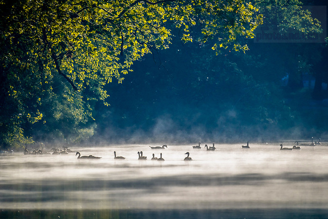 June 25, 2020; Ducks and geese float in a misty area of St. Mary's Lake (Photo by Matt Cashore/University of Notre Dame)