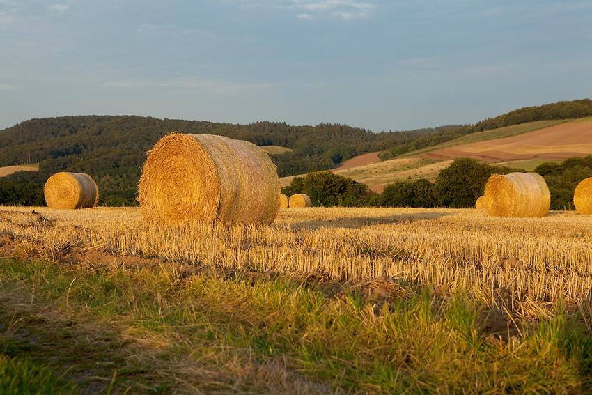 Europa, DEU, Deutschland, Rheinland-Pfalz, Eifel, Landkreis Ahrweiler, Agrarlandschaft nach der Getreideernte, Strohballen, Abendstimmung, Goldene Stunde, Landwirtschaft, Landwirtschaftlich, Agrar, Agrarwirtschaft, Natur, Naturfoto, Naturfotos, Naturfotografie, Naturphoto, Naturphotographie, Landschaft, Landschaften, Landschaftsfoto, Landschaftsfotografie, Landschaftsphoto, Landschaftsphotographie, <br /> <br /> [Fuer die Nutzung gelten die jeweils gueltigen Allgemeinen Liefer-und Geschaeftsbedingungen. Nutzung nur gegen Verwendungsmeldung und Nachweis. Download der AGB unter http://www.image-box.com oder werden auf Anfrage zugesendet. Freigabe ist vorher erforderlich. Jede Nutzung des Fotos ist honorarpflichtig gemaess derzeit gueltiger MFM Liste - Kontakt, Uwe Schmid-Fotografie, Duisburg, Tel. (+49).2065.677997, ..archiv@image-box.com, www.image-box.com]