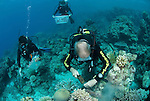 Charlie Veron takes coral samples in GBR, S 13°56.829', E 144°21.361'