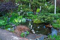 Garden pond with bog plants by patio ; O'Byrne Garden