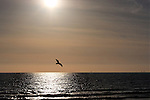 Freedom: lone seagull flies over Newport Beach, CA.