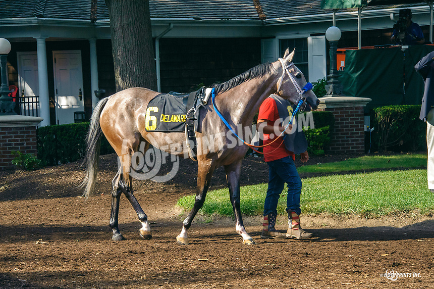 Dance With Me BW before The Buzz Brauninger Distaff Handicap at Delaware Park on 8/31/19