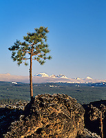 Pine growing in AA lava with Cascade peaks. Newberry National Volcanic Monument, Oregon.