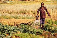 Korhogo, Ivory Coast, Cote d'Ivoire.  Senoufo Farmer Tending his Garden Plot.