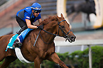 SHA TIN,HONG KONG-APRIL 29: Safety Check ,trained by Charlie Appleby,exercises in preparation for the Champions Mile at Sha Tin Racecourse on April 29,2016 in Sha Tin,New Territories,Hong Kong (Photo by Kaz Ishida/Eclipse Sportswire/Getty Images)