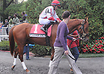 Carried Interest (no. 1), ridden by Alan Garcia and trained by Richard Violette Jr., runs in the 122nd running of the grade 2 Futurity Stakes for two year olds on September 30, 2012 at Belmont Park in Elmont, New York.  (Bob Mayberger/Eclipse Sportswire)