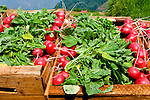 A crate of fresh radishes or rabanos, cut from the hillside farms near Zunil, Guatemala