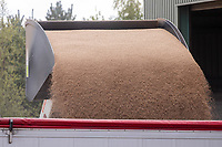 7-5-.2021 Loading a grain lorry from on farm gran storage <br /> ©Tim Scrivener Photographer 07850 303986<br />      ....Covering Agriculture In The UK....
