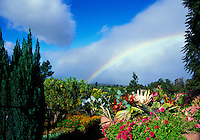 A rainbow over protea and flora in upcountry Kula at a 3,000-ft. elevation behind the Kula Lodge.