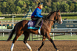 ARCADIA, CA  OCTOBER 30: Breeders' Cup Juvenile Turf entrant Graceful Kitten, trained by Amador Merei Sanchez,  exercises in preparation for the Breeders' Cup World Championships at Santa Anita Park in Arcadia, California on October 30, 2019.  (Photo by Casey Phillips/Eclipse Sportswire/CSM)
